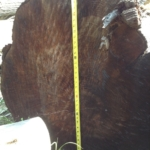 Assorted Hardwood Logs - 3ft Wide