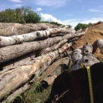 Assorted Hardwood Logs - For Sale; Hickory, Oak, Cedar, Pine, Maple, Mix