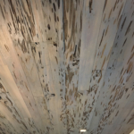 85 Old Growth Pecky Ceiling, Stained, alternate view