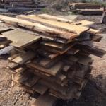 Sinker Cypress, New Growth Cypress Shorts