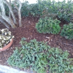 Cypress Mulch Chips, by Florida Cypress